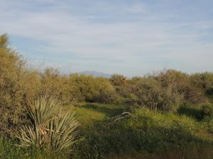 29607 N 141st St, Scottsdale AZ 85262